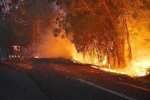 Bushfire5_1